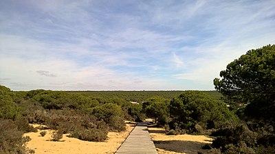 Pinar de Hinojos, Parque Natural de Doñana.jpg