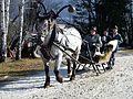 Pinzgauer Brauchtums- und Trachtenschlittenfest, 2. Februar 2014, 2.jpg