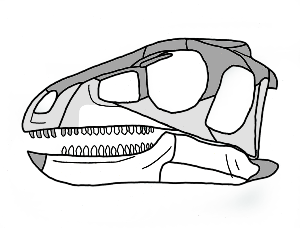 Pisanosaurus skull