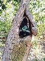 Plant inside a tree hole.jpg
