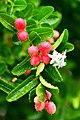 Plant of Thailand (8).jpg