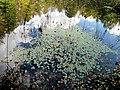Pond Cameron NC 3854 (15568550637).jpg