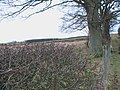 Pond Wood from West Linkhall farm track - geograph.org.uk - 1091799.jpg