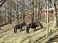Ponies on Piddledown Common - geograph.org.uk - 742545.jpg