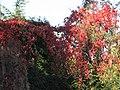 Pont Rout - Orgie de rouge.jpg