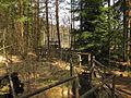 Prügelsteg im Naturpark Heidenreichsteiner Moor 2009-04 3.jpg