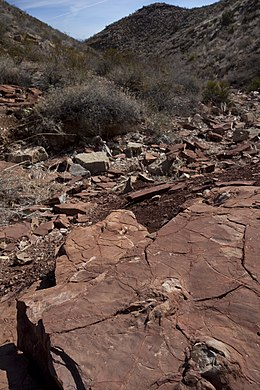 Prehistoric Trackways NM (9408762761).jpg