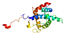 Protein CITED2 PDB 1r8u.png