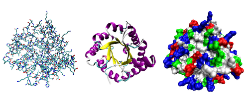 Three possible representations of the three-dimensional structure of the protein triose phosphate isomerase. Left: all-atom representation colored by atom type. Middle: simplified representation illustrating the backbone conformation, colored by secondary structure. Right: Solvent-accessible surface representation colored by residue type (acidic residues red, basic residues blue, polar residues green, nonpolar residues white).