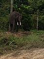 Pusat Latihan Gajah Riau 03.jpg
