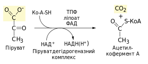 Pyruvate decarboxylation.svg