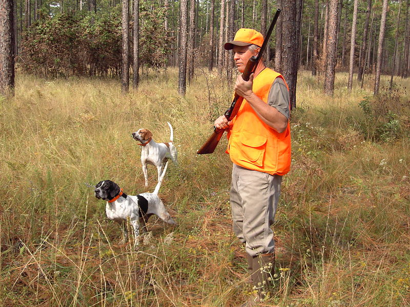 Quail Hunting with Dogs.jpg