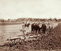 Queensland State Archives 3982 Twelve horses ploughing for wheat with a six furrow plough Green Hills Farm near Warwick 4 May 1894.png