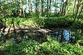 Réserve naturelle régionale des étangs de Bonnelles le 26 mai 2017 - 31.jpg
