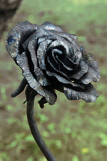 A Black Rose as Symbol of Ireland