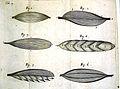 R. Lower, Tractatus de Corde, 1669 Wellcome L0020410.jpg