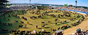 Sydney Showground Stadium - View of the 2001 Sydney Royal Easter Show Grand Parade, showing the Main Arena prior to redevelopment