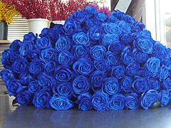 RS-bluerose2.jpg