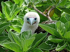 White bird amid green leaves, looking right at the camera
