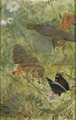 Redstarts and Butterflies. Five studies in one frame, NM 2223-2227 (Bruno Liljefors) - Nationalmuseum - 19283.tif