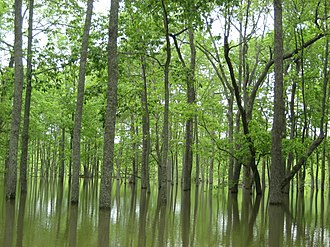 Cache River (Arkansas) - Image: Refuge Managers Worry that Weeks of Inundation Will Damage Bottomland Hardwood Forests, as Seen Here on Cache River National Wildlife Refuge (5758554905)