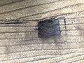 Reparatur einer Verschlussstelle in einem Waschbärpelz (Zunge ziehen) (2).jpg