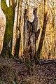 Restant van dode boom. Locatie, Kroondomein Het Loo. 25-12-2020 (d.j.b.) 01.jpg