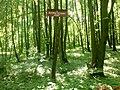 """Rezerwat przyrody ,Stasin"""" - panoramio.jpg"""