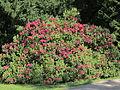 Rhododendronpark Kleine Bastei Rathen 3.JPG