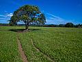 Rich pasture.jpg