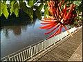Rio Piracicaba - panoramio (5).jpg