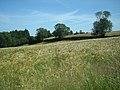 Ripening barley - geograph.org.uk - 892017.jpg