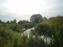 River Adur.jpg