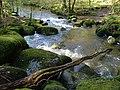 River Bovey at Horsham Steps - geograph.org.uk - 162099.jpg