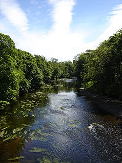 River Tees, Low Dinsdale.JPG