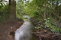 River Ter SSSI 1.jpg