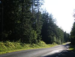 Road in Labanoras forest.jpg