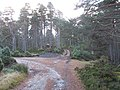 Road junction, Abernethy Forest - geograph.org.uk - 612763.jpg