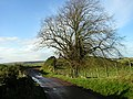 Roadside Tree Near Sandilands - geograph.org.uk - 284152.jpg