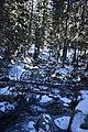 Rogers Pass Trail 08.jpg