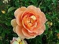 Rosa Pat Austin 2019-06-07 1267.jpg