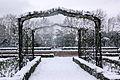 Rosaleda nevada (3185515302).jpg