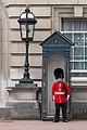 Royal Guard (21196443571).jpg