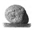Roze fig.89.png