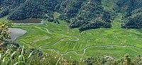 Rupa Lake & paddy fields.jpg