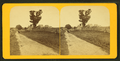 Rural landscape, from Robert N. Dennis collection of stereoscopic views 2.png