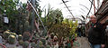 Russdionnedotcom-Ogies Cactus green house Panorama1.jpg