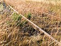 Rusty tracks turned to gold by evening sun 2.jpg