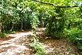 Samaná Province, Dominican Republic - panoramio (143).jpg