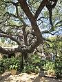 San Antonio, Texas (2018) - 035.jpg